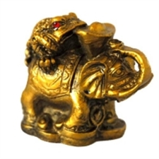Picture of Money Coin Frog on Elelphant